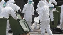 Vogelgrippe-Virus H7N9 fordert 20 Tote in China seit Anfang des Jahres