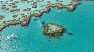 Great Barrier Reef: Korallenbleiche bedeutet Todesurteil